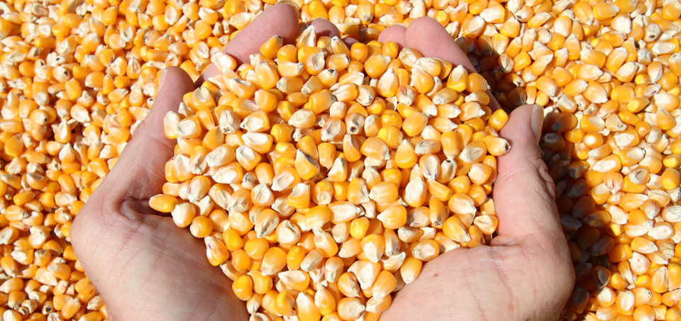 анализа-квлитета-семена