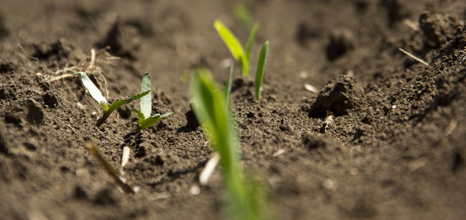 osnovno-seme